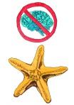 Starfish have no brain. Itsatangent copyright 2012